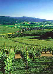 Self-guided walking holiday in Alsace
