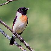 Holidays for bird watchers