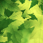 Go green - eco-friendly holidays